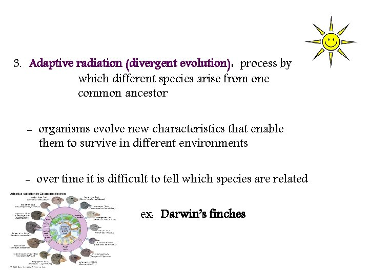 3. Adaptive radiation (divergent evolution): process by which different species arise from one common