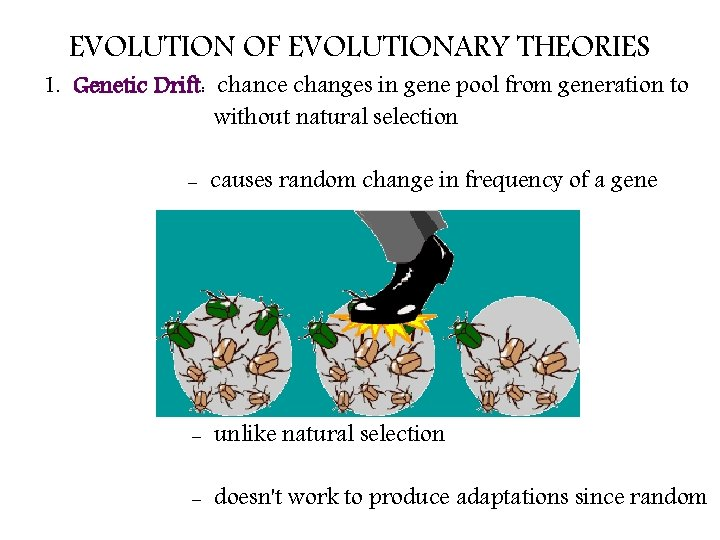 EVOLUTION OF EVOLUTIONARY THEORIES 1. Genetic Drift: chance changes in gene pool from generation