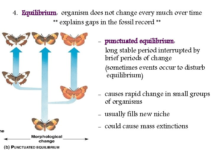 4. Equilibrium: organism does not change every much over time ** explains gaps in