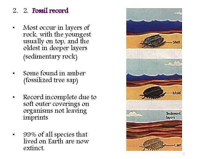 2. 2. Fossil record • Most occur in layers of rock, with the youngest