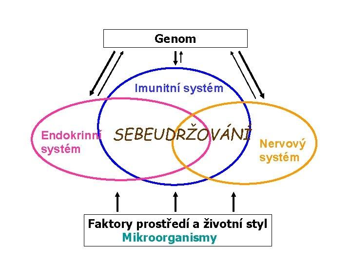 Genom Imunitní systém Endokrinní systém SEBEUDRŽOVÁNÍ Nervový systém Faktory prostředí a životní styl Mikroorganismy