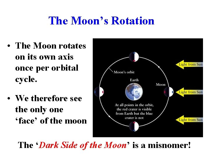 The Moon's Rotation • The Moon rotates on its own axis once per orbital