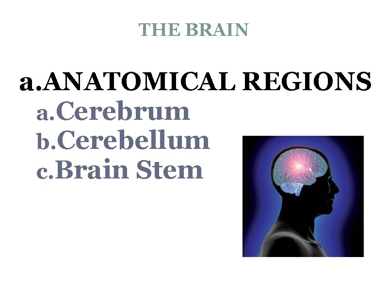 THE BRAIN a. ANATOMICAL REGIONS a. Cerebrum b. Cerebellum c. Brain Stem