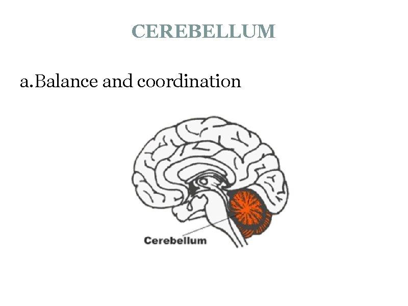 CEREBELLUM a. Balance and coordination
