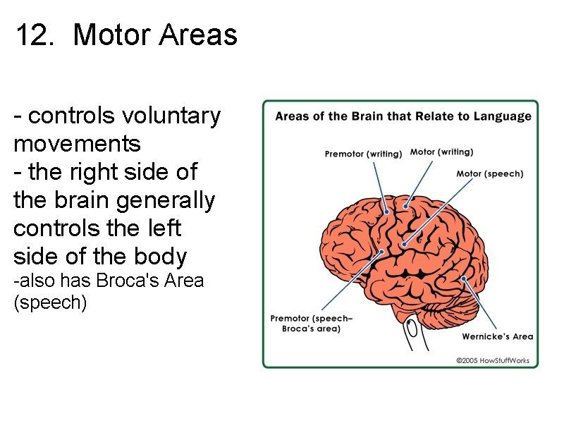 12. Motor Areas - controls voluntary movements - the right side of the brain