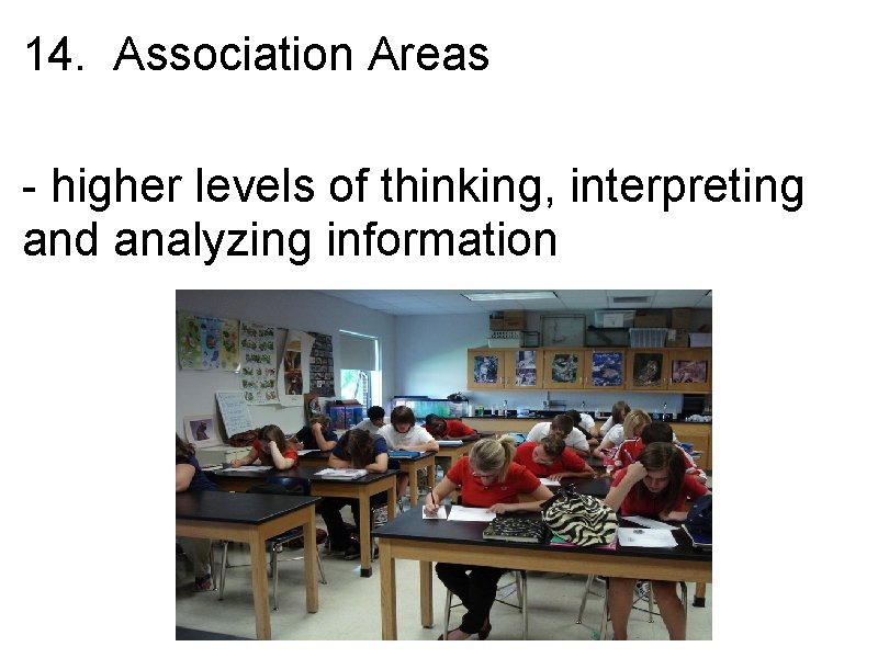 14. Association Areas - higher levels of thinking, interpreting and analyzing information