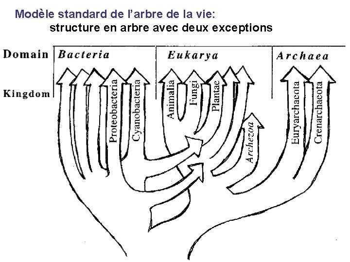 Modèle standard de l'arbre de la vie: structure en arbre avec deux exceptions