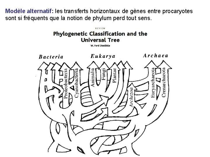 Modèle alternatif: les transferts horizontaux de gènes entre procaryotes sont si fréquents que la