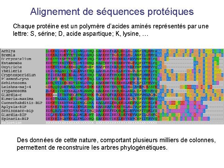 Alignement de séquences protéiques Chaque protéine est un polymère d'acides aminés représentés par une