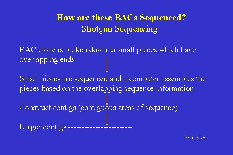 How are these BACs Sequenced? Shotgun Sequencing BAC clone is broken down to small