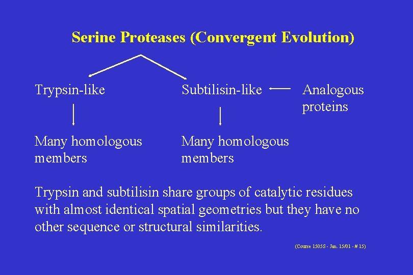 Serine Proteases (Convergent Evolution) Trypsin-like Subtilisin-like Many homologous members Analogous proteins Trypsin and subtilisin