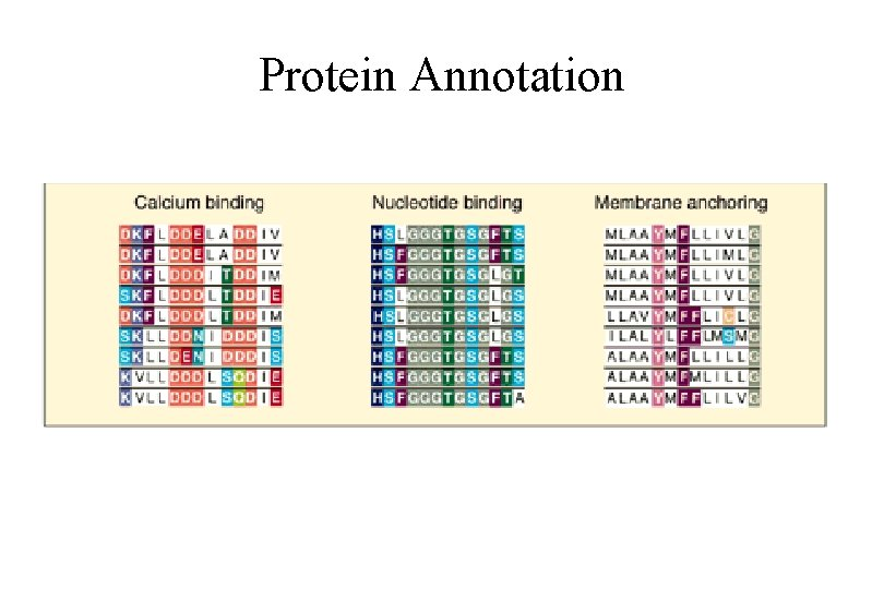 Protein Annotation