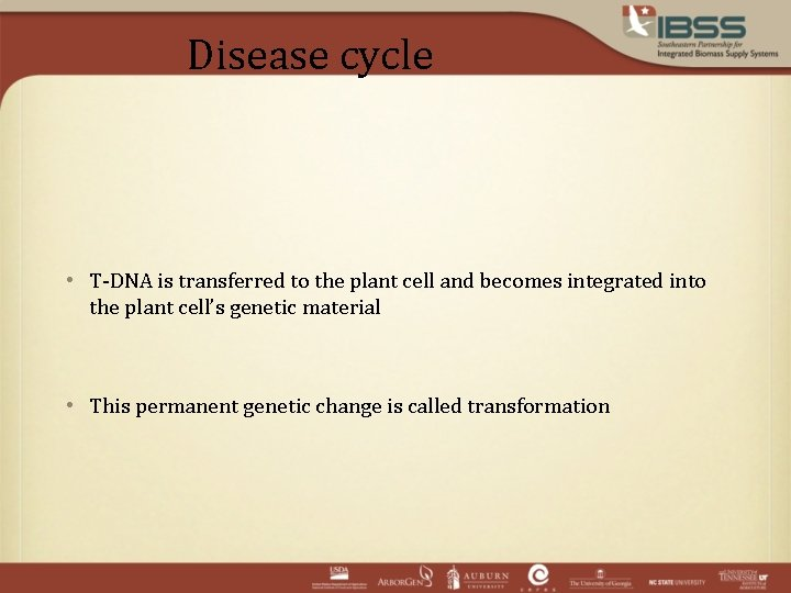 Disease cycle • T-DNA is transferred to the plant cell and becomes integrated into