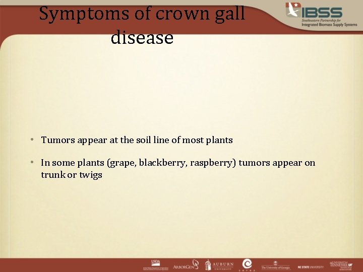 Symptoms of crown gall disease • Tumors appear at the soil line of most