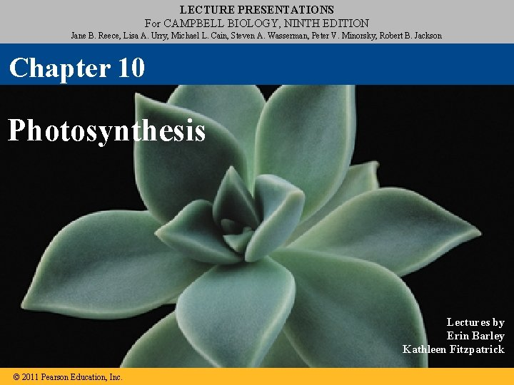 LECTURE PRESENTATIONS For CAMPBELL BIOLOGY, NINTH EDITION Jane B. Reece, Lisa A. Urry, Michael