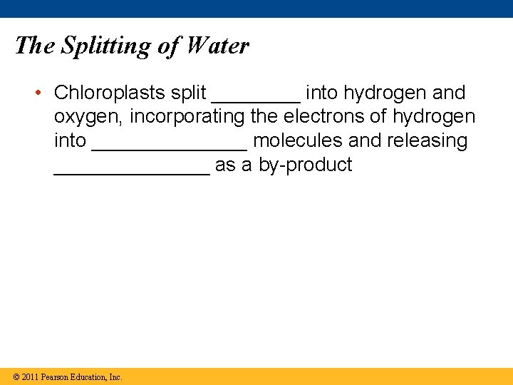 The Splitting of Water • Chloroplasts split ____ into hydrogen and oxygen, incorporating the