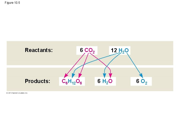 Figure 10. 5 Reactants: Products: 6 CO 2 C 6 H 12 O 6
