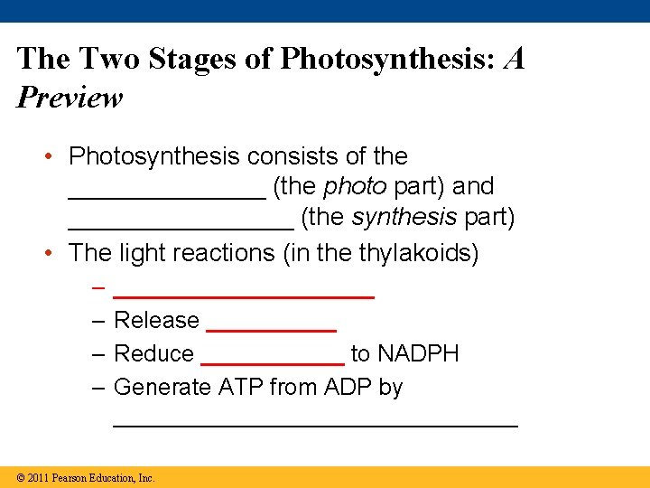 The Two Stages of Photosynthesis: A Preview • Photosynthesis consists of the _______ (the