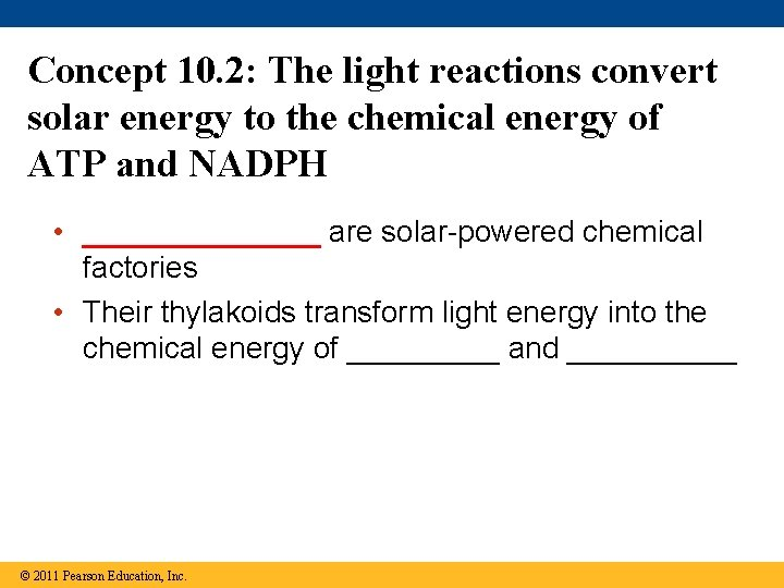 Concept 10. 2: The light reactions convert solar energy to the chemical energy of