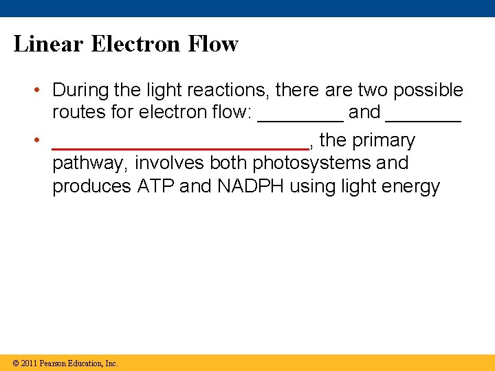 Linear Electron Flow • During the light reactions, there are two possible routes for