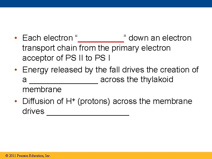 """• Each electron """"_____"""" down an electron transport chain from the primary electron"""