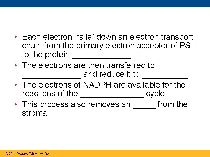 """• Each electron """"falls"""" down an electron transport chain from the primary electron"""