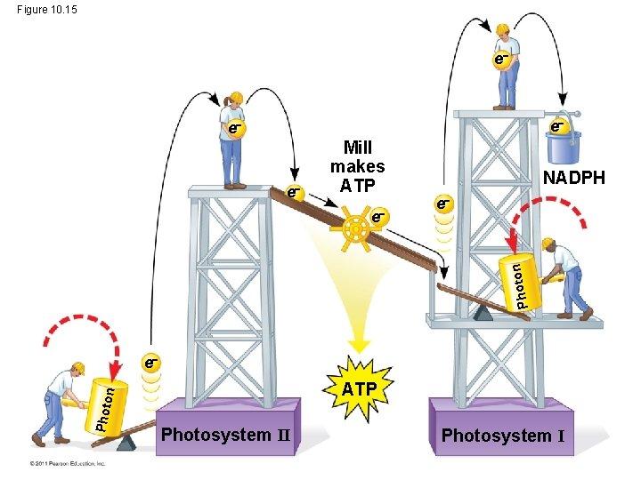 Figure 10. 15 e e Mill makes ATP e Photo n e NADPH e