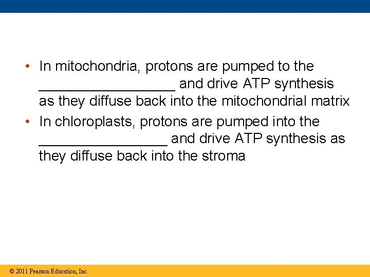 • In mitochondria, protons are pumped to the _________ and drive ATP synthesis