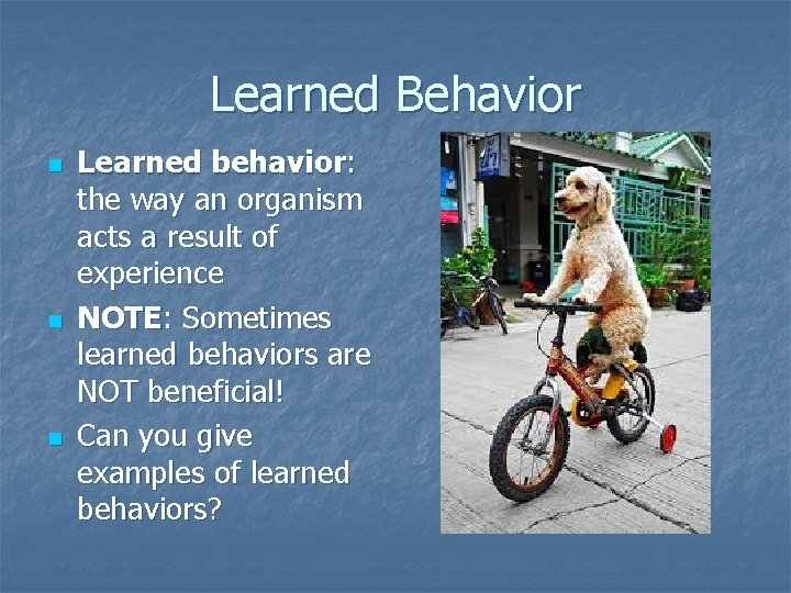 Learned Behavior n n n Learned behavior: the way an organism acts a result