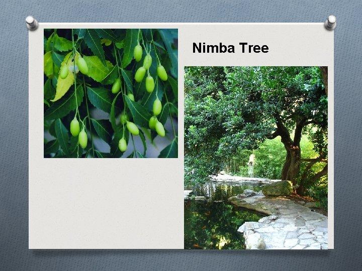 Nimba Tree