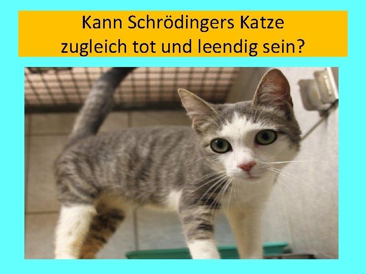 Kann Schrödingers Katze zugleich tot und leendig sein?