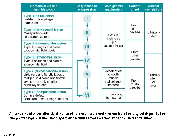American Heart Association classification of human atherosclerotic lesions from the fatty dot (type I)