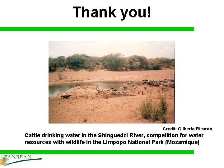 Thank you! Credit: Gilberto Ricardo Cattle drinking water in the Shinguedzi River, competition for