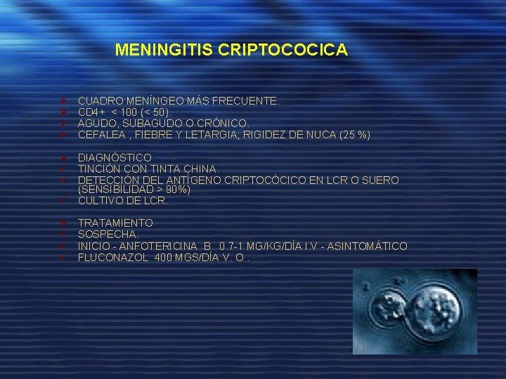MENINGITIS CRIPTOCOCICA Ø Ø CUADRO MENÍNGEO MÁS FRECUENTE. CD 4+ < 100 (< 50).