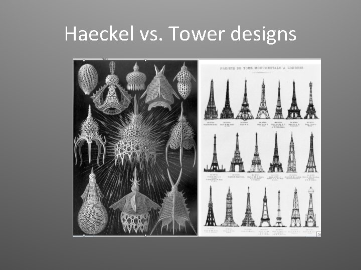 Haeckel vs. Tower designs