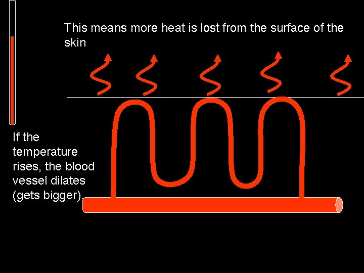 This means more heat is lost from the surface of the skin If the