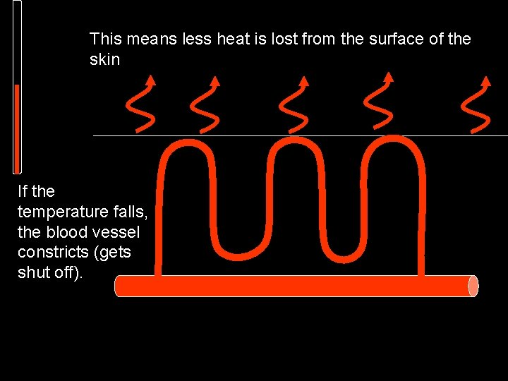 This means less heat is lost from the surface of the skin If the