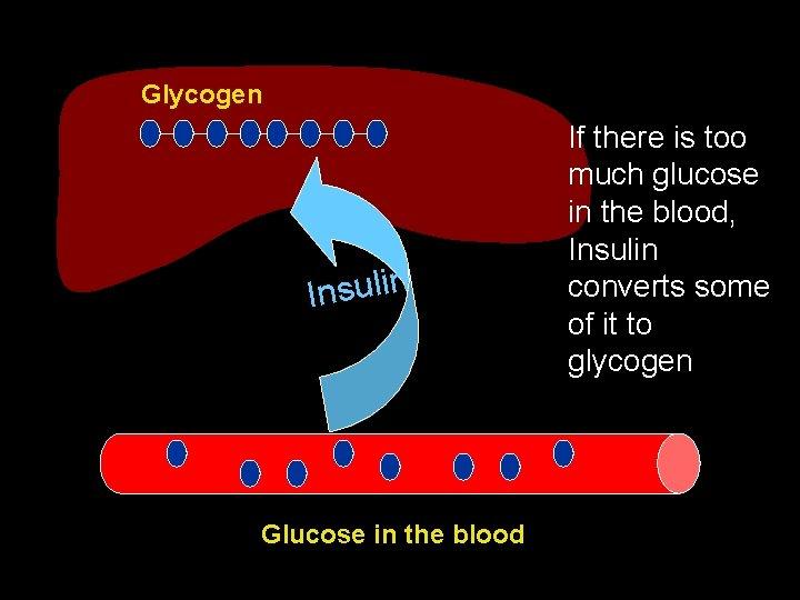 Glycogen n i l u s n I Glucose in the blood If there