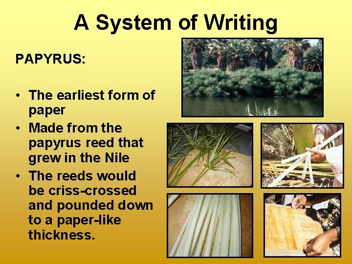 A System of Writing PAPYRUS: • The earliest form of paper • Made from
