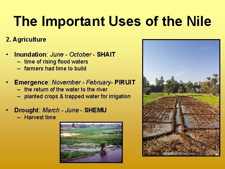 The Important Uses of the Nile 2. Agriculture • Inundation: June - October -