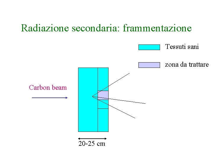 Radiazione secondaria: frammentazione Tessuti sani zona da trattare Carbon beam 20 -25 cm