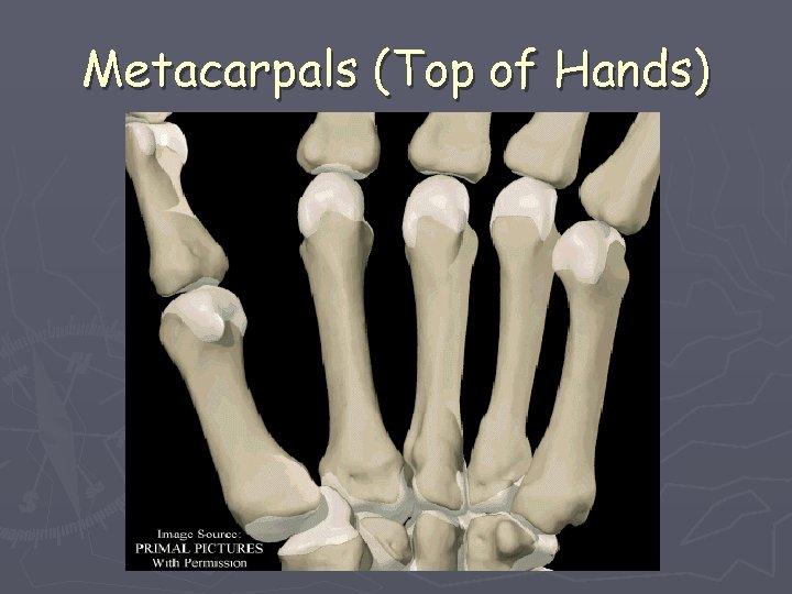 Metacarpals (Top of Hands)