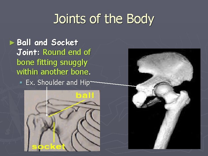 Joints of the Body ► Ball and Socket Joint: Round end of bone fitting