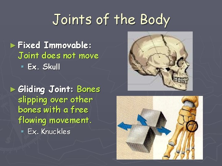 Joints of the Body ► Fixed Immovable: Joint does not move § Ex. Skull