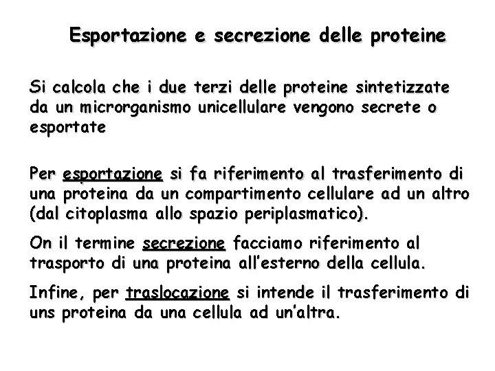 Esportazione e secrezione delle proteine Si calcola che i due terzi delle proteine sintetizzate