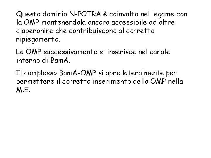 Questo dominio N-POTRA è coinvolto nel legame con la OMP mantenendola ancora accessibile ad