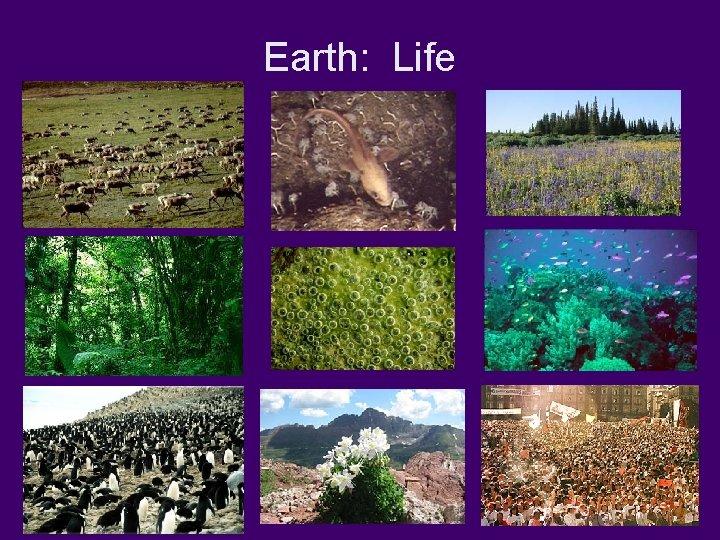 Earth: Life