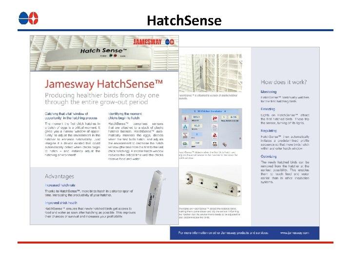 Hatch. Sense
