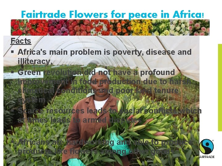 Fairtrade Flowers for peace in Africa! Facts § Africa's main problem is poverty, disease