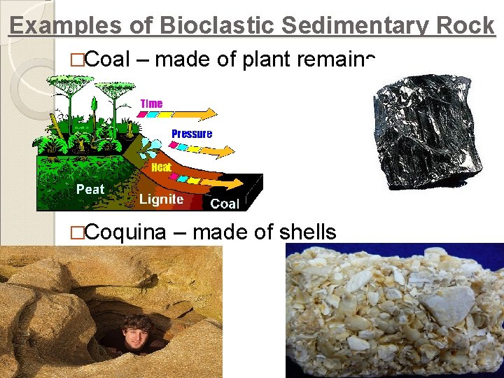 Examples of Bioclastic Sedimentary Rock �Coal – made of plant remains �Coquina – made